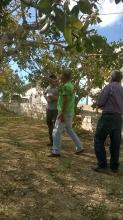 Μέγαρα, Αττική (Δρ. Γ. Τρωγιάνος, Δρ. Σ. Θεοχαρόπουλος)
